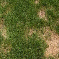 lawn insect control