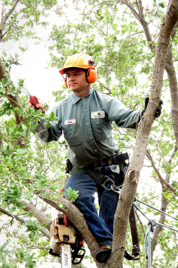 tree trimming in pinecerest florida