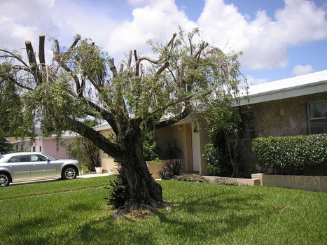 Hatracking on pinecrest florida property