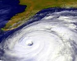 hurricane tree preparedness