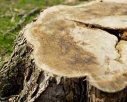 stump removal in miami