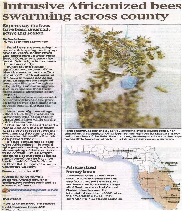 intrusive africanized bees swarming across county