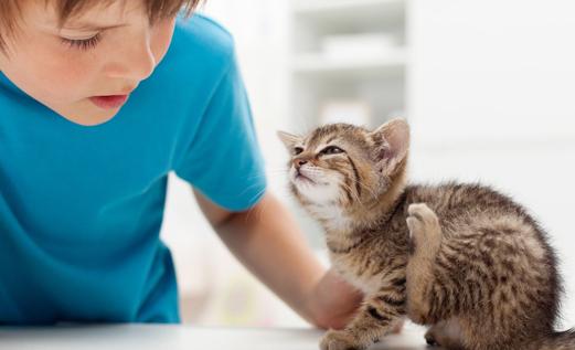 cat scratching flea inside of house