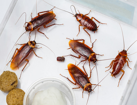 cockroach control in south florida