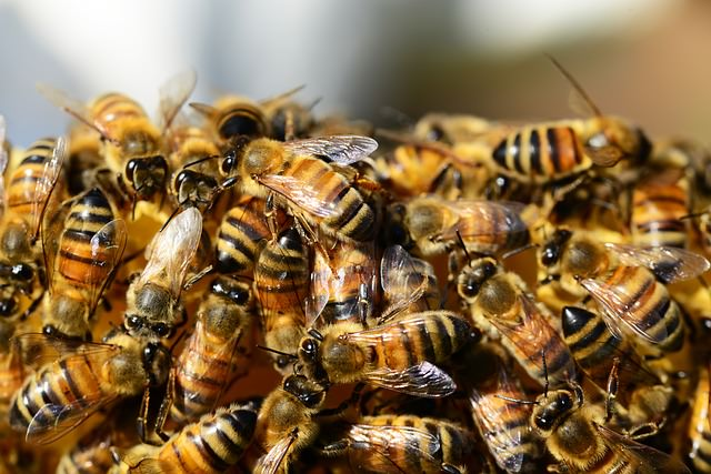 honey bees on property