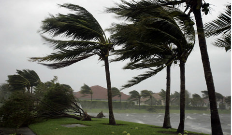 hurricanes damage on palm trees