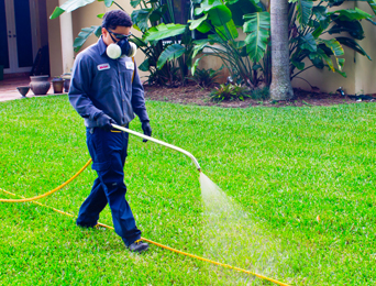lawn spray by one two tree