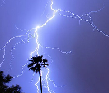 lightning strikes palm tree