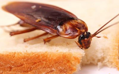 roach making way into kitchen