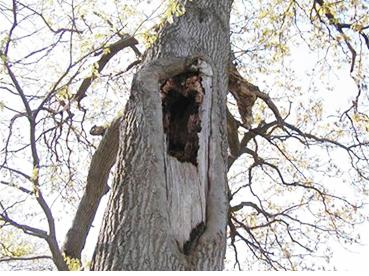 tree cavities on broward county florida property