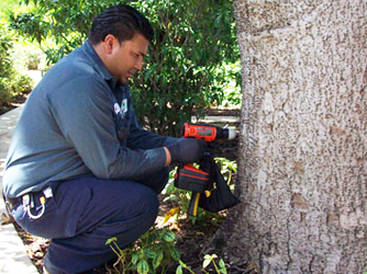 tree injections drill