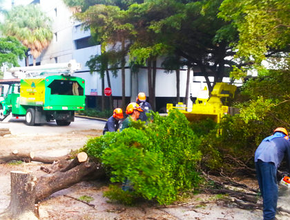 tree removal in action taken in brickell