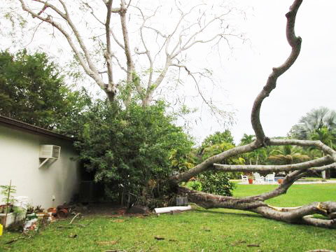 trees vs home insurance