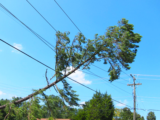 tree falls on the powerline at coral gables