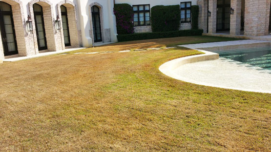 before fertilization on miami beach lawn