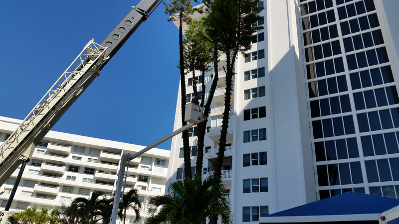 crane positioned for tree removal
