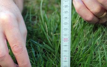 messure grass