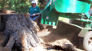 one two tree stump removal and grinding