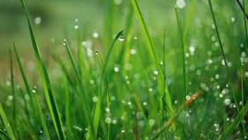 wet lawn