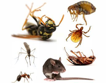 most wanted pests