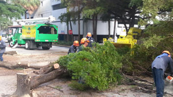 tree service job miami beach