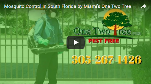 Mosquito Control in South Florida