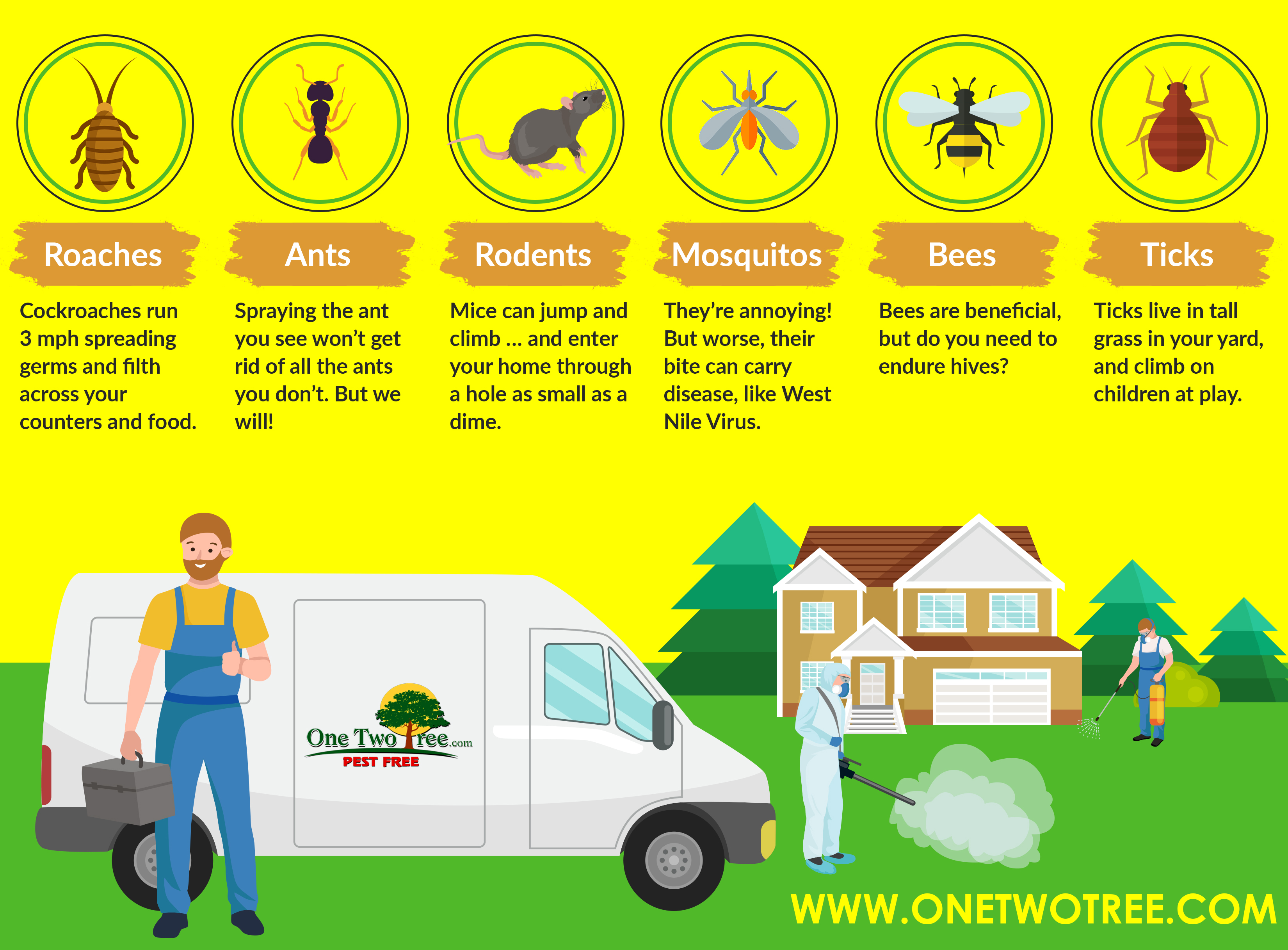 pest control infographic showing common pest found in South Florida