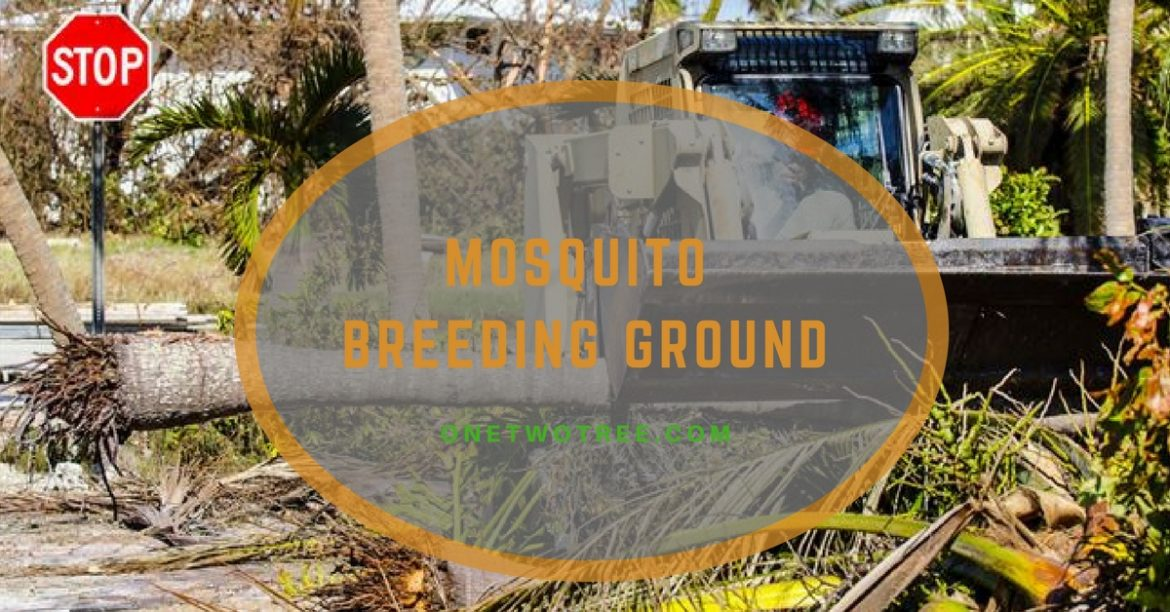 MOSQUITO BREEDING GROUND
