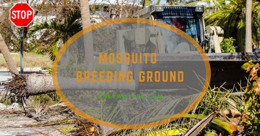 MOSQUITO BREEDING GROUND