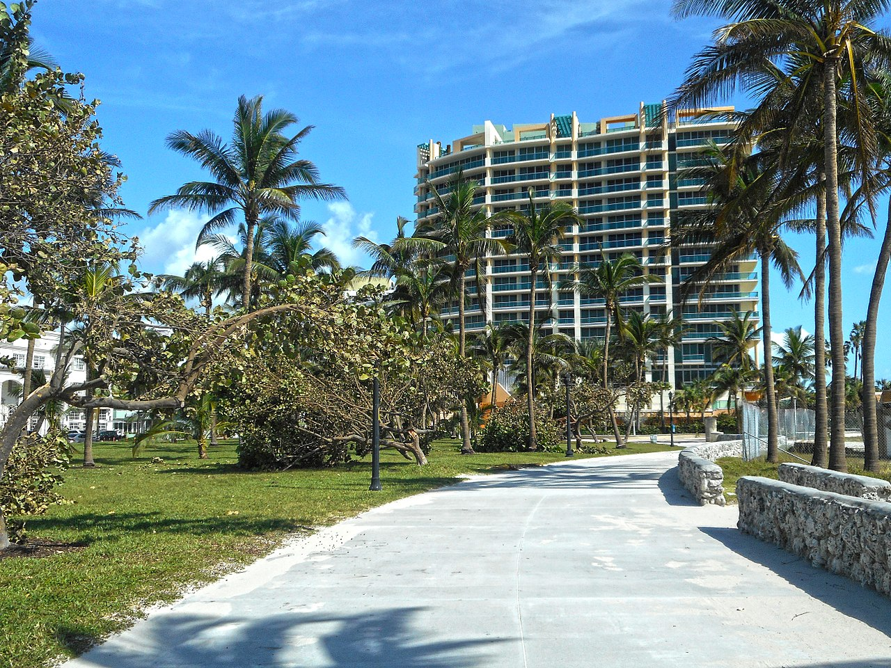 bent tress in miami beach after hurricane irma