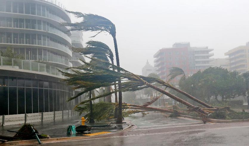 miami downtown palm trees bent and fallen during hurricane irma