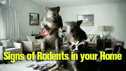 Signs of Rodents in your home