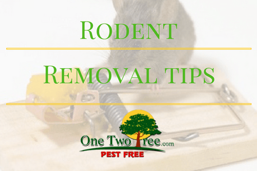 Rodent Removal Tips
