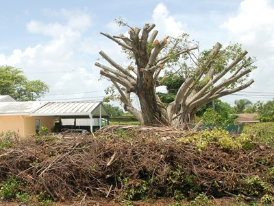 An example of a poorly conducted tree removal.