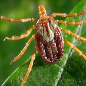 Tick removal from a yard or garden is a One Two Tree practice every day.