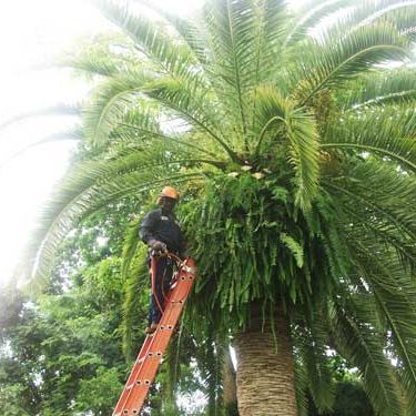 Miami tree trimming services are best left to experts.