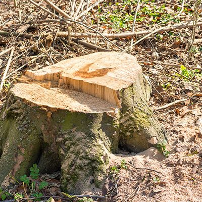 Tree stump removal by One Two Tree is safe and complete.
