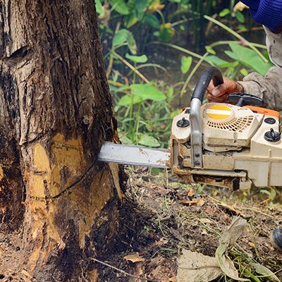 South Florida Tree Removal is a service that takes the risk out of your hands.