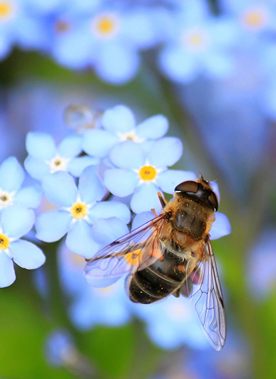 Bees are attracted by flowers, food, and even noises.