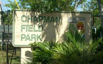 One Two Tree helps rejuvenate Chapman Field Park
