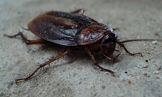 Pest Control Services in Miami often treat homes for cockroaches.