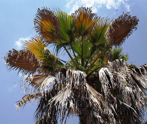 Palm tree problems can be addressed by a tree expert like One Two Tree.
