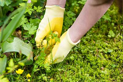 common-weeds-1