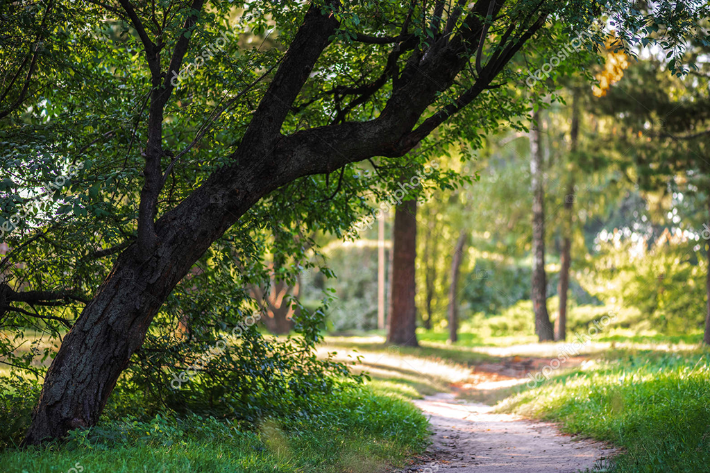 depositphotos_216202132-stock-photo-empty-pathway-park-green-trees