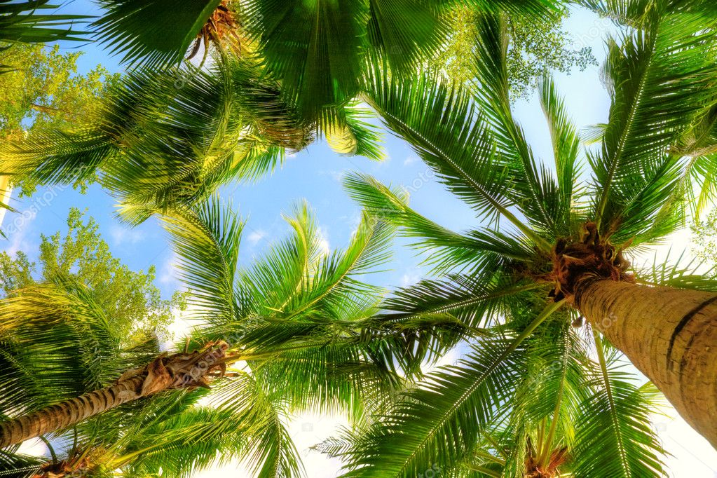 depositphotos_5631744-stock-photo-palm-trees (1)