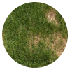 Disease control allows a lawn to be well-cared for in South Florida.