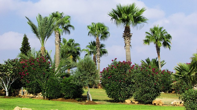 By using a Tree Removal Service, Miami homes can realize their landscaping goals easier.