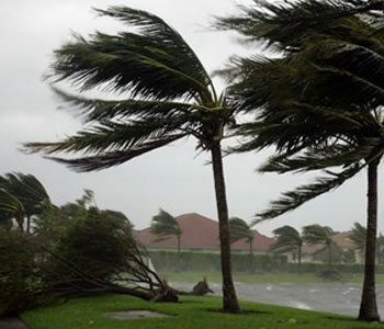 Unfortunately, hurricanes are common palm tree problems we cannot control.