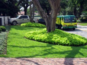 improve-your-green-landscaping-miami