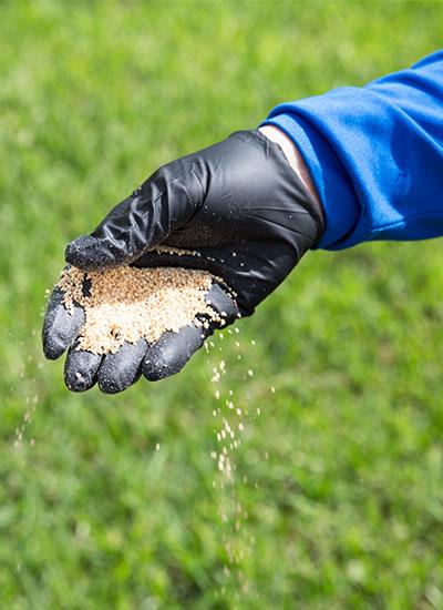 A fertilization plan is part of our lawn care services.